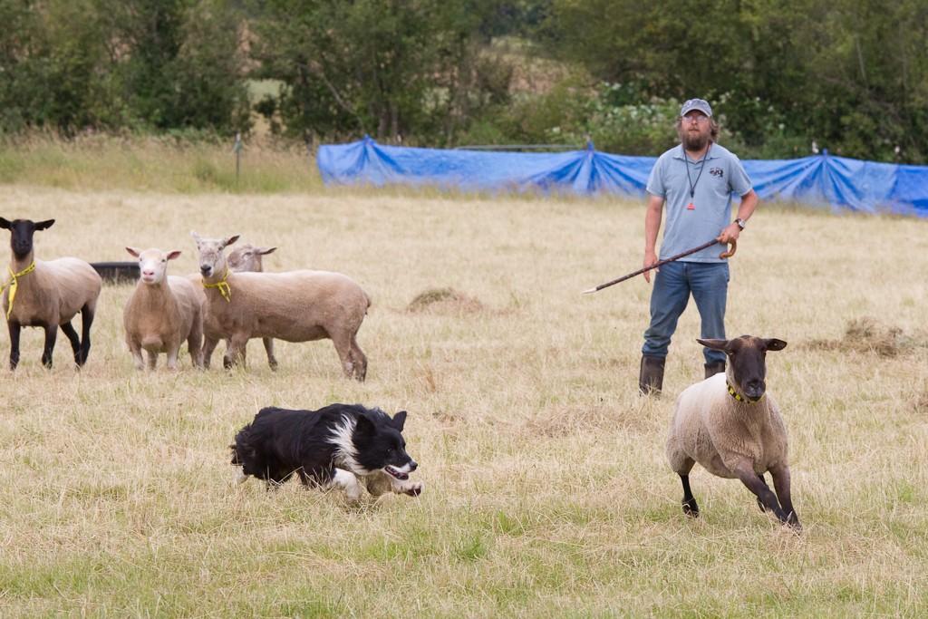 Wolston Farms